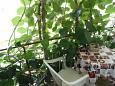 Lumbarda, Balcony u smještaju tipa apartment, WIFI.