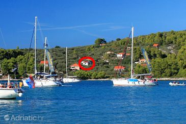Property Gradina (Korčula) - Accommodation 4466 - Apartments near sea.