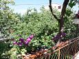 Terrace - view - Apartment A-4977-a - Apartments Barbat (Rab) - 4977