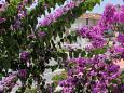 Balcony - view - Studio flat AS-6693-b - Apartments Makarska (Makarska) - 6693