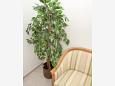 Hallway - Apartment A-9446-d - Apartments Prožurska Luka (Mljet) - 9446