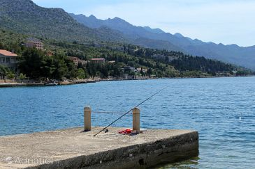 Kozjača u rivijeri Paklenica (Sjeverna Dalmacija)